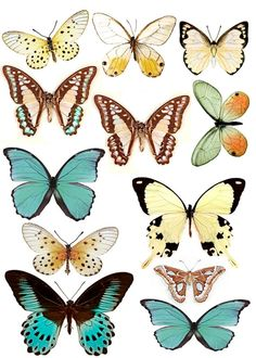 Swirlydoos: Forums / Images & Graphics / Butterflies by madelinem