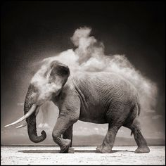 Nick Brandt is a photographer with a real and genuine passion for his subjects, African animals.  His pictures bring this well-known photography genre to another level, adding intimacy and romance.