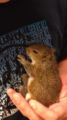 Man Raised a squirrel from almost birth...photos of his growth