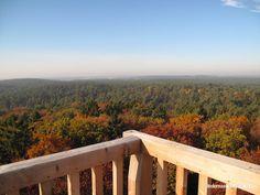 Der Herbst, der Wald und der Hohe Mechtin