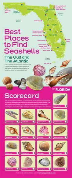 Best Beaches in Florida for Beach Combing & Shelling Venice Beach Florida, Best Beach In Florida, Florida Vacation, Florida Travel, Florida Beaches, Italy Vacation, Usa Travel, Vacation Trips, Sea Glass Beach