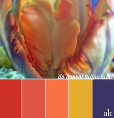 a parrot-tulip-inspired color palette