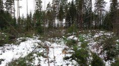 Hartman Koti vieraili Seinäjoen asuntomessualueella - Hartman Koti