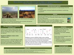 GPSC Student Showcase 2011: Stage of invasion: How do sensitive seedlings respond to buffelgrass?