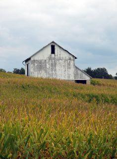 Barn & cornfield.