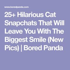 25+ Hilarious Cat Snapchats That Will Leave You With The Biggest Smile (New Pics) | Bored Panda