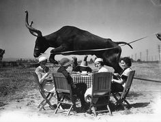 Crazy picture of steer jumping over picnic table
