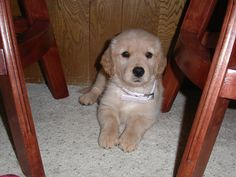 Hiding. #puppy