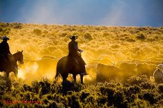 Advertising and Editorial Cowboy, Stagecoach and Western Lifestyle Imagery - Stock Cowboy and Western Lifestyle Photography