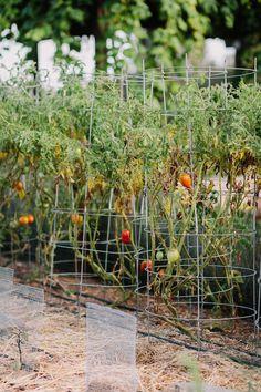 Intimate Garden Wedding with Sweet Farm Details - Inspired By This Spring Wedding, Garden Wedding, Greenery Decor, Wedding Ceremony Backdrop, Garden Oasis, Industrial Wedding, Vegetable Garden, Lush, Backdrops