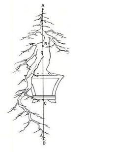 Wigert's Bonsai Articles › Cascade Style Bonsai – Kengai