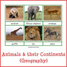 Animals and their continents store product image