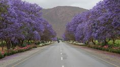 The road between Robertson and Bonnievale at Van Loveren Family Vineyards & De Wetshof Estate