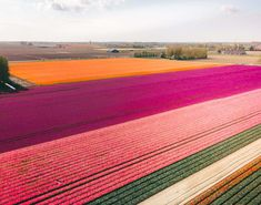 From April, Tulips in the Netherlands are most visited in Keukenhof, Lisse, or Amsterdam. Read about a location to see tulips for free without any tourists! Tulip Fields Netherlands, The Netherlands, The Places Youll Go, Places To See, Visit Amsterdam, Europe Travel Guide, Nightlife Travel, Beautiful Places To Visit, France