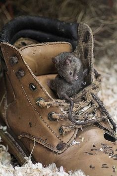 swansong-willows:  (via Pin by SHABBY GIRL♡ on AUTUMN IN BROWN | Pinterest) house mouse in boot by layzee66 on Flickr