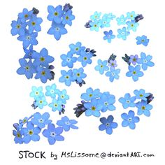 forget-me-not drawing | forget me not STOCK by MsLissome