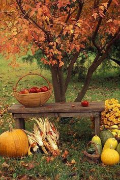 Elements of Fall . Mums, Fall Harvest and beautiful Fall Leaves on trees. Autumn Day, Autumn Leaves, Winter, Autumn Table, Golden Leaves, Autumn Scenes, Fall Photos, Fall Images, Fall Harvest
