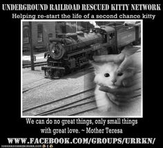 "The Underground Railroad Rescued Kitty Network > Rather than bitching about the ""abuses"" of the big societies, spend your time supporting the little ones working in the trenches..."
