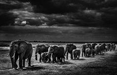 Flashes de África - Observador