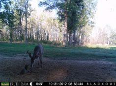 Deer Season? Squirrel Season!