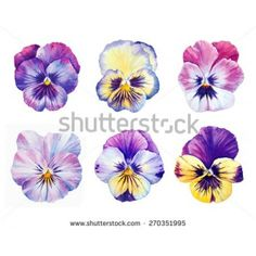 Watercolor card with pansies flowers royalty free stock image ...
