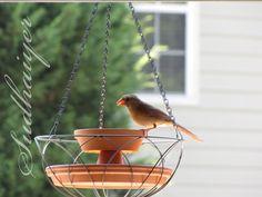 DIY bird feeder using clay pots & hanging basket (cat proof!)