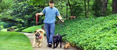Not sure where to start as a dog walker? Get expert advice from Care.com on how to successfully start and grow your dog-walking business.