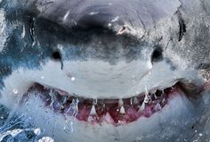 Большая белая акула уберегов города Гансбай, ЮАР.