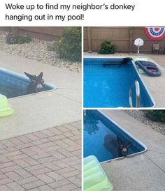 35 Random And/Or Hilarious Pictures From Today's Internets Summer Summer Summertime, Funny Animals, Funniest Animals, Best Funny Pictures, Hanging Out, Outdoor Decor, Adulting, Sock, Internet