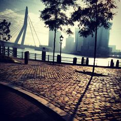 Rotterdam city the netherlands earlymorning view! Oh The Places You'll Go, Great Places, Places To Travel, Beautiful Places, Places To Visit, Travel Local, World Cities, Best Cities, Wonders Of The World