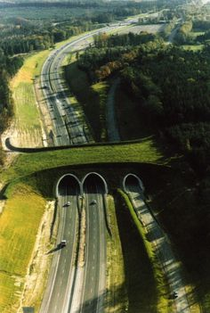 Ecoduct in Netherlands: One of many wildlife bridges! I have never seen one, some day!