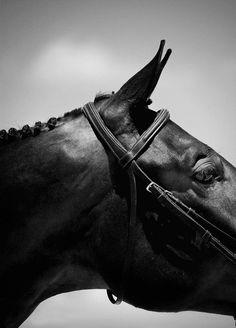 Equus. S)