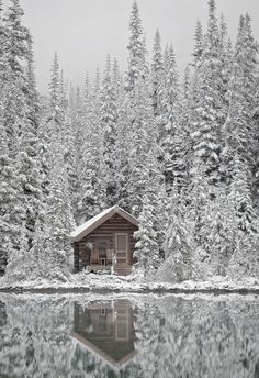 Stay in a little cabin in the woods - in the snow