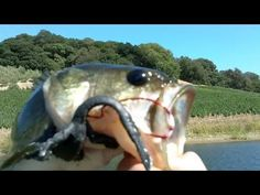Lunker Lizard Topwater Mat Fishing - Largemouth Bass