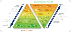 """This """"double food pyramid"""" encourages sustainable eating. Mediterranean Diet Pyramid, Food Pyramid, Food System, Meat And Cheese, Food Science, Seasonal Food, White Meat, Plant Based Diet, Clean Eating"""