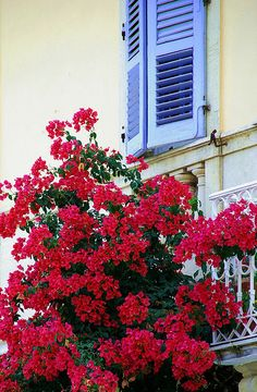 Colors of Corfu, Greece Beautiful Flowers, Beautiful Places, Corfu Town, Greek Blue, Corfu Island, Corfu Greece, Still Life Photos, Beautiful Islands, Greek Islands