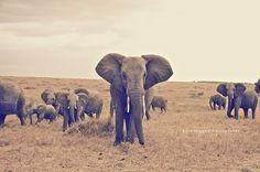 Masai Mara, Kenya. Stunning. By Kate Magee Joyce