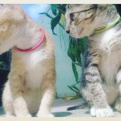 Sunny & Pepper #猫 #子猫 #愛らしい #かわいい #猫 #ニャー #猫の足 #あまりにもかわいい #愛 #愛猫 #晴れた #美しい一日 #cats #kittens #tabby