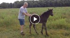 Baby Horse Demands Butt Scratches