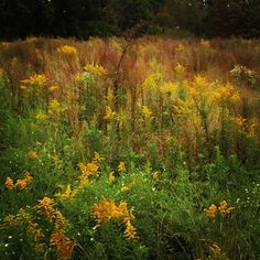 Nice color.  #GhostWomanStudios #meadow #midday #overcast #Surry #earlyautumn