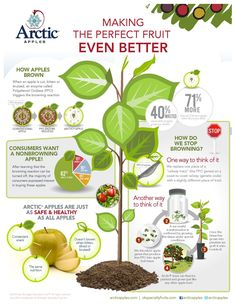 Arctic Apples are the first non-browning apples using biotechnology (GMOs). Reducing waste, eating healthier, and making the apple healthier too! Brown Apple, Apple Cut, Plant Breeding, Food Experiments, Apple Varieties, Food Security, New Fruit, Food Science, Granny Smith