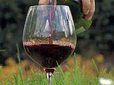 Bylinné víno — Recepty — Kouzelné bylinky — Česká televize Red Wine, Alcoholic Drinks, Glass, Drinkware, Corning Glass, Liquor Drinks, Alcoholic Beverages, Liquor, Yuri