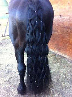 What a beautiful tail!