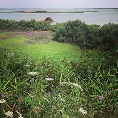 Il Parco del Delta del Po coi suoi silenzi e una natura ancora incontaminata è un paradiso per il birdwatching | MyTurismoER: Ravenna attraverso lo sguardo fotografico di @livingravenna