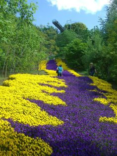 Awesome Flower Street