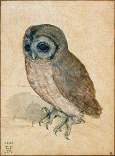 """https://flic.kr/p/bPc4HM   Albrecht Dürer 'Little Owl' (Kleine Eule) Screech Owl,1508   Albrecht Dürer [German painter, printmaker, engraver, mathematician, and theorist, 1471 – 1528] 19.2 x 14 cm Watercolor, heightened with white gouache, pen and black ink on paper Albertina museum, Vienna, Austria Biography: <a href=""""http://en.wikipedia.org/wiki/Albrecht_D%c3%bcrer"""" rel=""""nofollow"""">en.wikipedia.org/wiki/Albrecht_D%C3%BCrer</a> ___ Slight restoration by plumleaves"""
