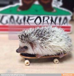 Tony Hog! Spikey skater pro