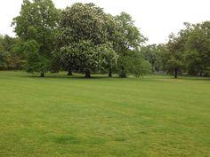 Greenwich garden (Greenwich garden) - Londres, Reino Unido (London, UK) - iPhone 4S & Camera+ Copyright © Juan Hernandez Orea