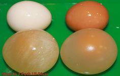 Dissolve the egg shells in vinegar to create a bouncy egg