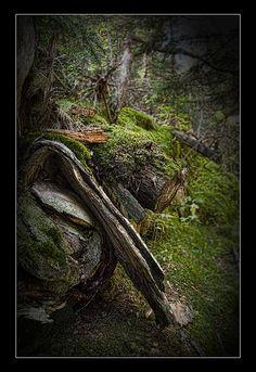 Parque Nacional de Aigüestortes.